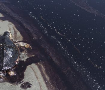 EAST GRAND TERRE ISLAND - JUNE 07:  A dead sea turtle lies next to a rolling tide of crude oil, released following the sinking of the BP Deepwater Horizon drilling rig, along the shore of East Grand Terre Island on June 7, 2010.  (Photo by Benjamin Lowy/Edit by Getty Images)