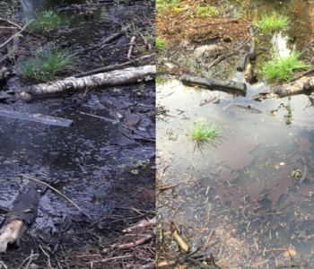 Before and after DissOil - Oil spill in forest, Uppsala, SWEDEN